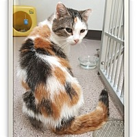 Adopt A Pet :: Sophie - Willmar, MN