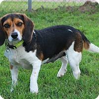 Adopt A Pet :: Jade - Shreveport, LA