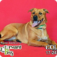 Adopt A Pet :: Goldie - Seville, OH