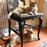 Adopt A Pet :: Stewart Couch Potatoe - Rohrersville, MD