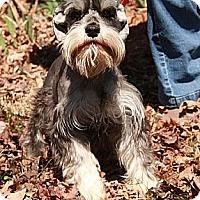 Adopt A Pet :: Kayla - Staunton, VA