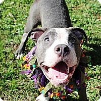 Adopt A Pet :: Ziggy - Orlando, FL