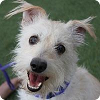 Adopt A Pet :: Basil - Las Vegas, NV