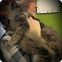 Adopt A Pet :: Verity - Fairborn, OH