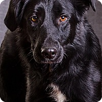 Adopt A Pet :: Riddle - Owensboro, KY