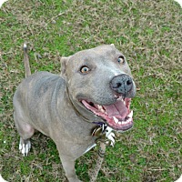Adopt A Pet :: Lady - Manchester, CT