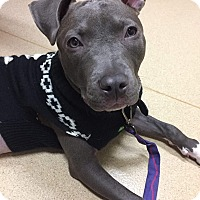 Adopt A Pet :: Athena **Courtesy Cupid** - West Allis, WI