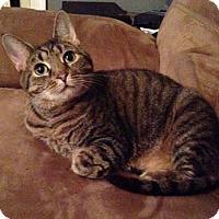Adopt A Pet :: Princess - Merrifield, VA
