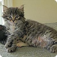 Adopt A Pet :: Tera - Victor, NY