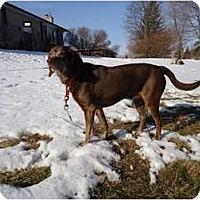 Adopt A Pet :: Oreo-LOWER ADOPTION FEE - Toronto/Etobicoke/GTA, ON