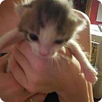 Adopt A Pet :: Tinker Bell - Shavertown, PA