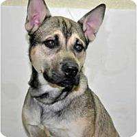 Adopt A Pet :: Chai - Port Washington, NY