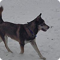 Adopt A Pet :: Sable - York, SC