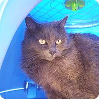 Adopt A Pet :: Sapphire - Mountain Center, CA