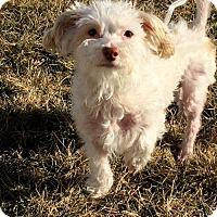 Adopt A Pet :: Jax - Lincoln, NE