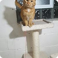Adopt A Pet :: Valintino - Port Huron, MI