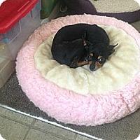 Adopt A Pet :: Lulu - Milton, FL