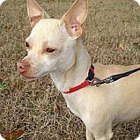 Adopt A Pet :: POPCORN - ROCKMART, GA