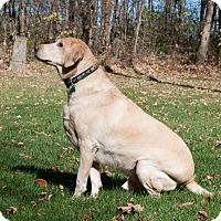 Adopt A Pet :: Levi - Lewisville, IN