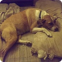 Beagle Mix Dog for adoption in Alvarado, Texas - Gyrl