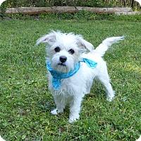 Adopt A Pet :: Paris - Mocksville, NC