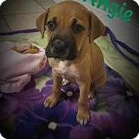 Adopt A Pet :: Angie - Marlton, NJ