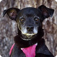 Adopt A Pet :: Sosa - San Diego, CA