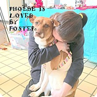 Adopt A Pet :: Phoebe - Mooresville, NC
