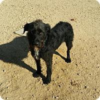 Adopt A Pet :: Jasper - Maquoketa, IA