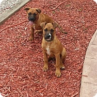 Adopt A Pet :: Maxx and Murph - Richmond, MI