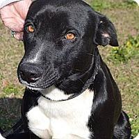 Adopt A Pet :: BLAINEY - Glenburn, ME