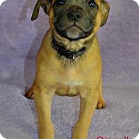 Adopt A Pet :: Guselle - Yreka, CA