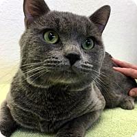 Adopt A Pet :: Vladimer - Las Vegas, NV