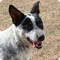Adopt A Pet :: Cowgirl - Kittery, ME