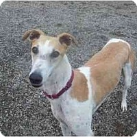 Adopt A Pet :: Luck - Roanoke, VA