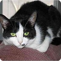 Adopt A Pet :: Maye - North Boston, NY