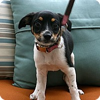 Adopt A Pet :: Kailey - Mission Viejo, CA