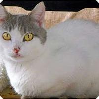 Adopt A Pet :: Kanga - Alexandria, VA