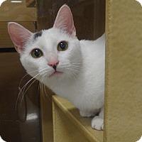 Adopt A Pet :: WILLIAM - Diamond Bar, CA