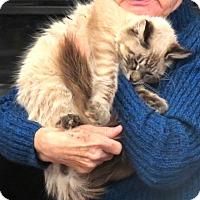 Adopt A Pet :: Wooley Bear - Davis, CA