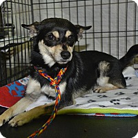 Adopt A Pet :: Tobey - Meridian, ID