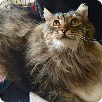 Adopt A Pet :: Mr. Buddha - Oberlin, OH