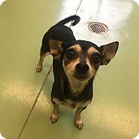 Adopt A Pet :: Rizzo - Gadsden, AL