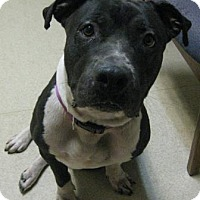 Adopt A Pet :: Vinny - Gary, IN