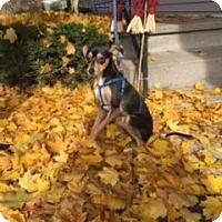 Adopt A Pet :: Lexi - Avon, NY