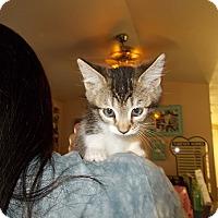 Adopt A Pet :: Rosaline - Lemoore, CA