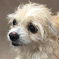 Adopt A Pet :: Cathy - Garland, TX