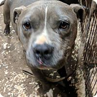 Adopt A Pet :: Donner - Covington, TN