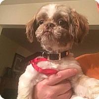 Adopt A Pet :: Jesse - Hedgesville, WV