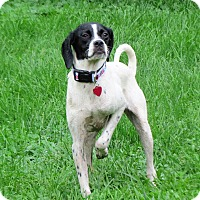 Adopt A Pet :: Weenie- Foster Home Needed - Wood Dale, IL
